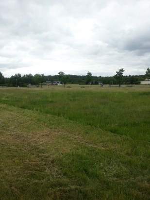 Gras im Juni (2)