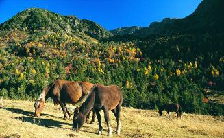 Andorran Horses Autumn