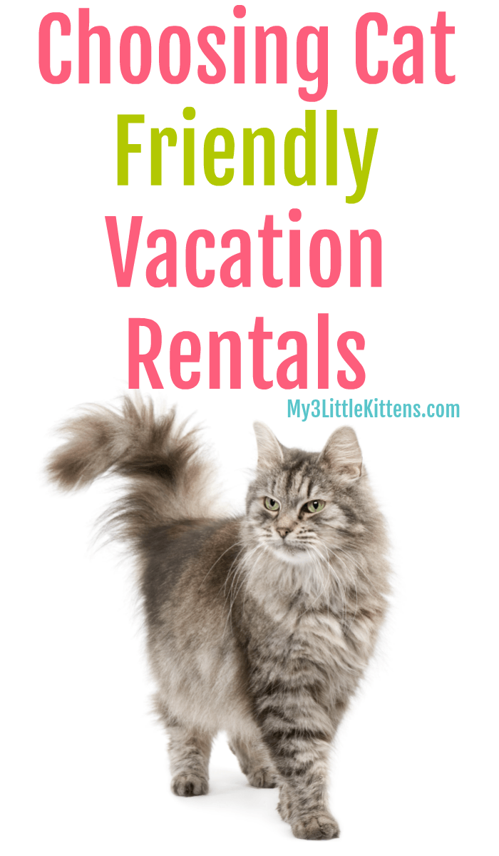 Choosing Cat Friendly Vacation Rentals My 3 Little Kittens