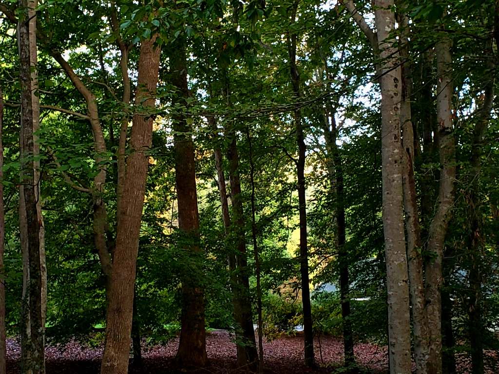 high contrast Forest Trees fall colors