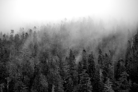 Fog filtered through forest