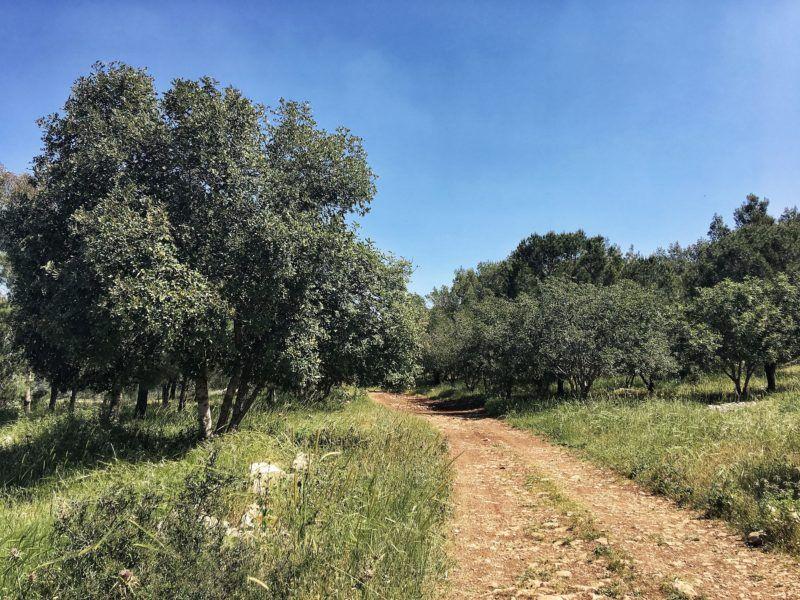 Jesus Trail