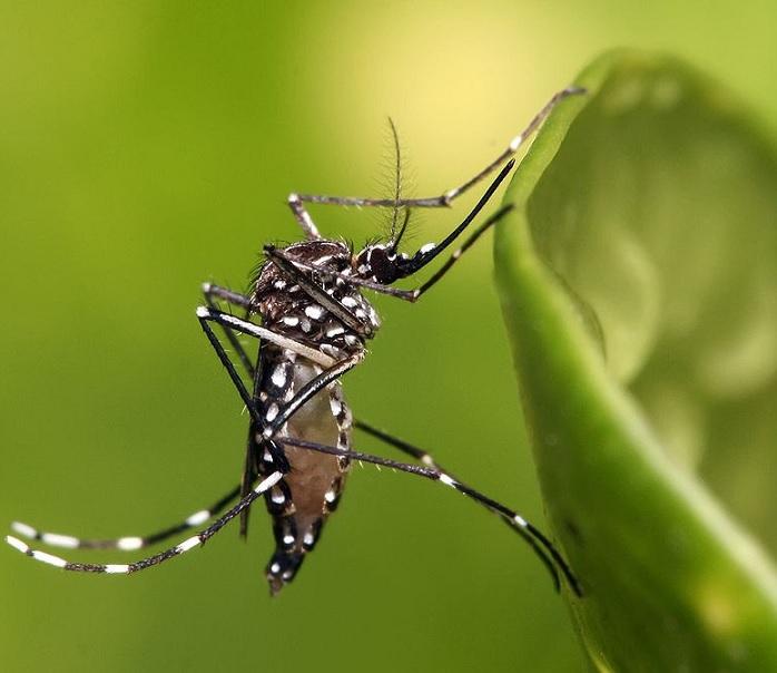 Burkina-Faso : Des moustiques génétiquement modifiés pour lutter contre le paludisme