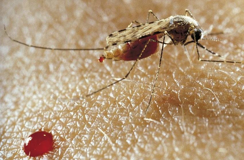 Algérie/ Le pays reconnu désormais sans paludisme