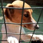 SPCA Doggies That Need A Good Home