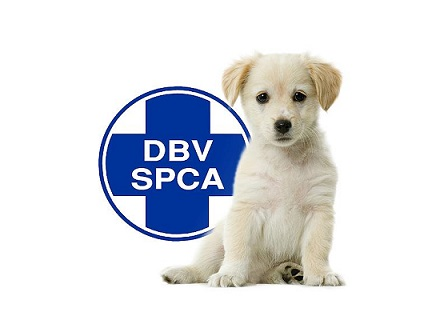 SPCA Alberton How To Help