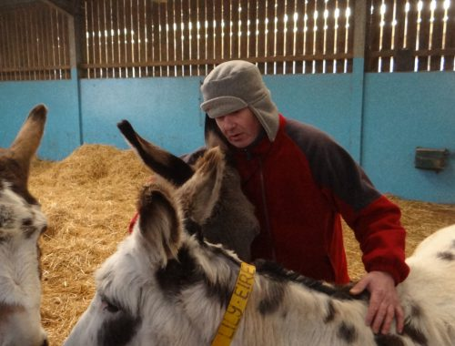 duncan at donkey sanctuary