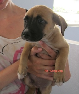 My experience with the Anguilla Animal Rescue Foundation (AARF)