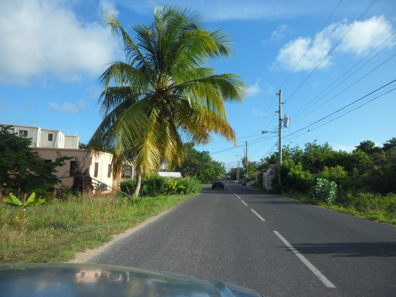 Coconut tree on side of road in Stoney Ground Anguilla