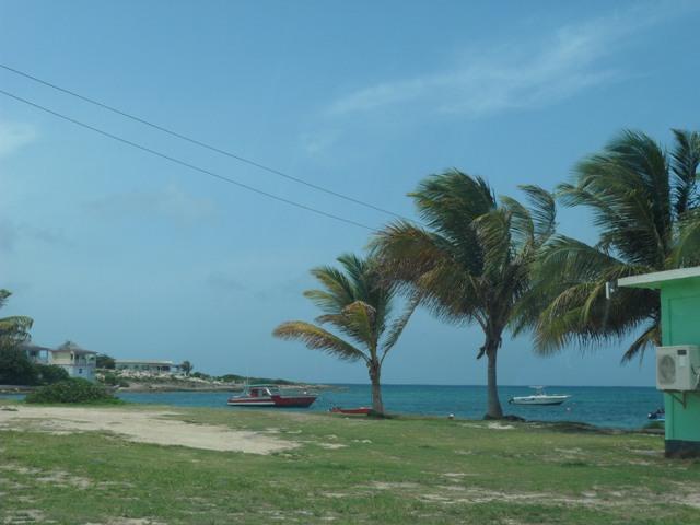 Trees bordering the View through grade 6 window at the Vivien Vanterpool Primary School, Anguilla