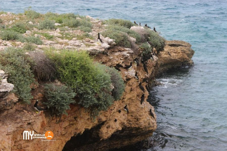 Boobies on a cliff at Dog Island