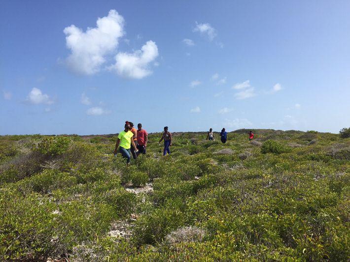 Scrub Island Anguilla Hike