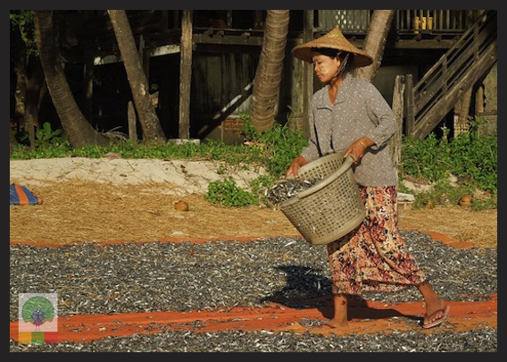 Ngapali Beach - Myanmar (Burma) 4