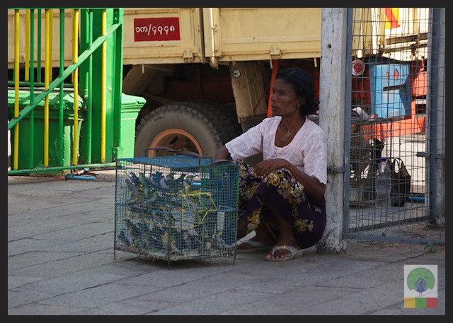 Buddhist Worshipers Set Birds free for Good Luck - Yangon - Myanmar (Burma) 3