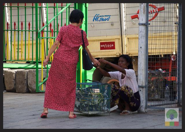 Buddhist Worshipers Set Birds free for Good Luck - Yangon - Myanmar (Burma) 4