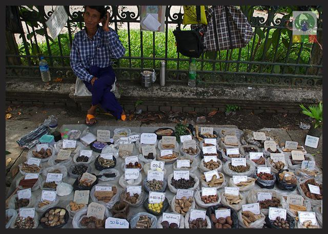 Natural Medicines Stall - Yangon - Myanmar (Burma) 2