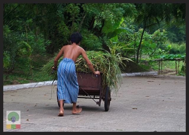 Royal White Elephant Garden - Hsin Hpyu Daw Park - Insein Township - Yangon - Myanmar (Burma) 5