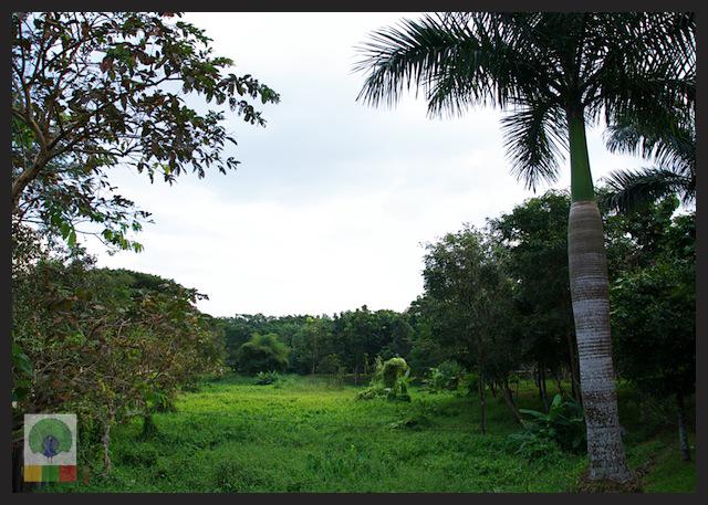 Royal White Elephant Garden - Hsin Hpyu Daw Park - Insein Township - Yangon - Myanmar (Burma)