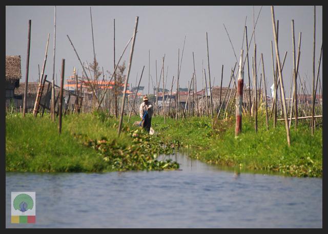 Floating Gardens Inle Lake - Myanmar (Burma) 4