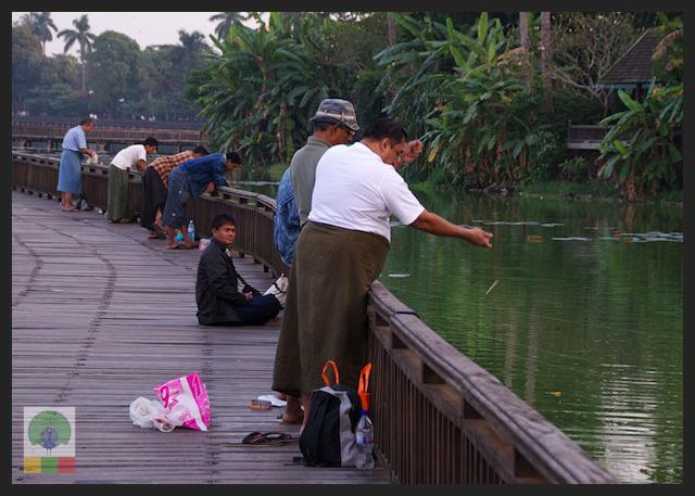 Kandawgyi Lake - Fishing - Yangon - Myanmar (Burma)
