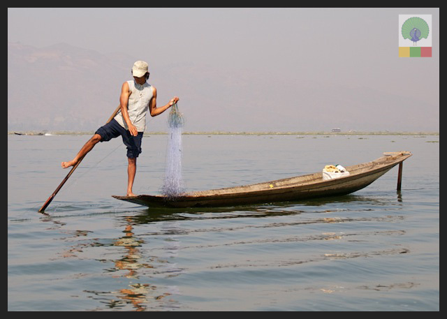 One leg paddling fisherman - Inle Lake - Myanmar (Burma) 2