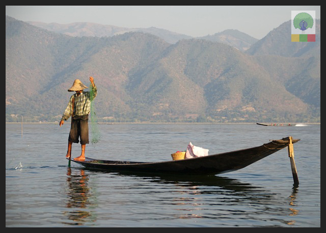 One leg paddling fisherman - Inle Lake - Myanmar (Burma) 3
