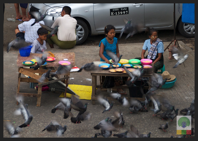 Pigeon Food Vendor around Sule Paya - Yangon - Myanmar (Burma)