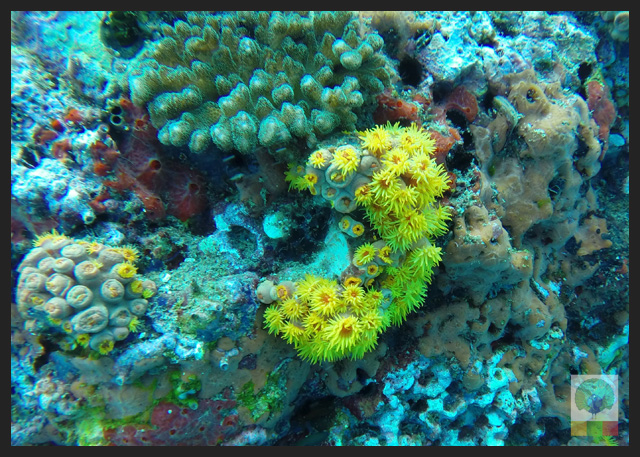 Diving-in-Ngapali-beach-Myanmar-Travel-Essentials-14