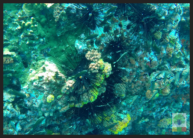 Diving-in-Ngapali-beach-Myanmar-Travel-Essentials-15