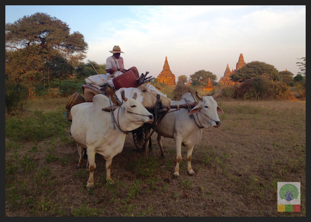 Perfect Family Trip - Oxen and Cart Bagan - Myanmar Travel Essentials