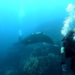 Mantas at Black Rock Diving Trip - Myanmar Travel Essentials 2