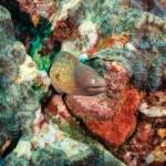 Moray Eel - Mergui Archipelago Diving Trip - Myanmar Travel Essentials