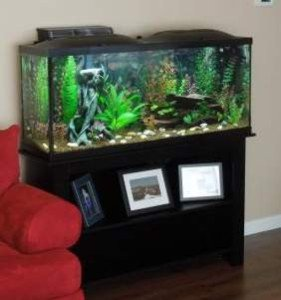 9 Quality 40 Gallon Aquarium  Tanks Reviewed and Compared