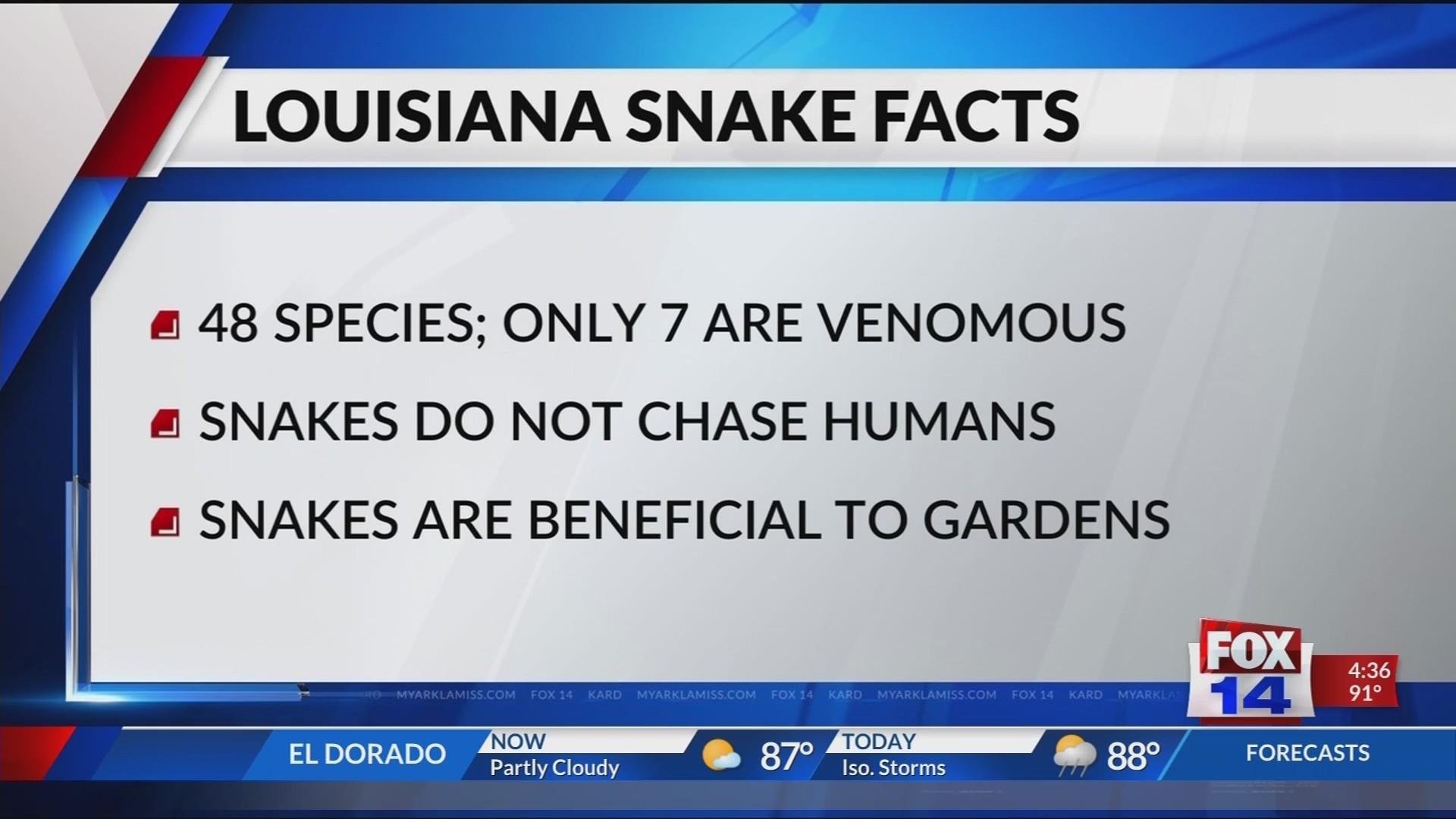 In The Garden: Snakes