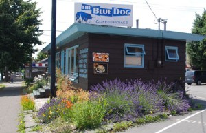 bluedog_outside-500-1