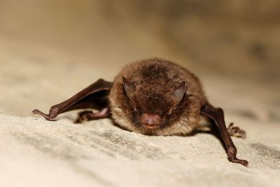 Rabid bat found in Seattle's Ballard neighborhood, public health officials warn