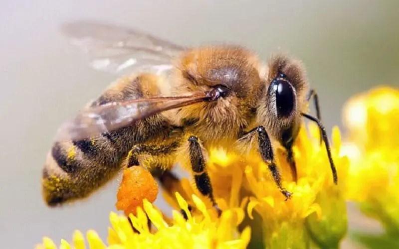 How The Honey Bees Navigate Mybeeline