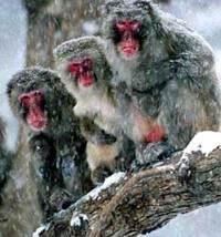 See monkeys fresh from Kansas City!