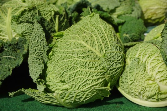 savaoy cabbage