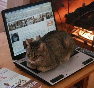 El gato y la computadora