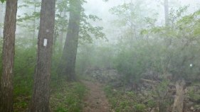Foggy morning on the trail in Maryland