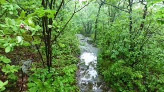 Wet trails