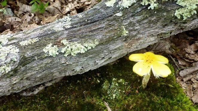 Mushroom or flower?