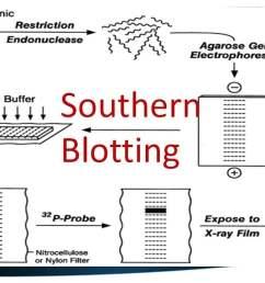 brief introduction blotting techniques [ 1280 x 720 Pixel ]