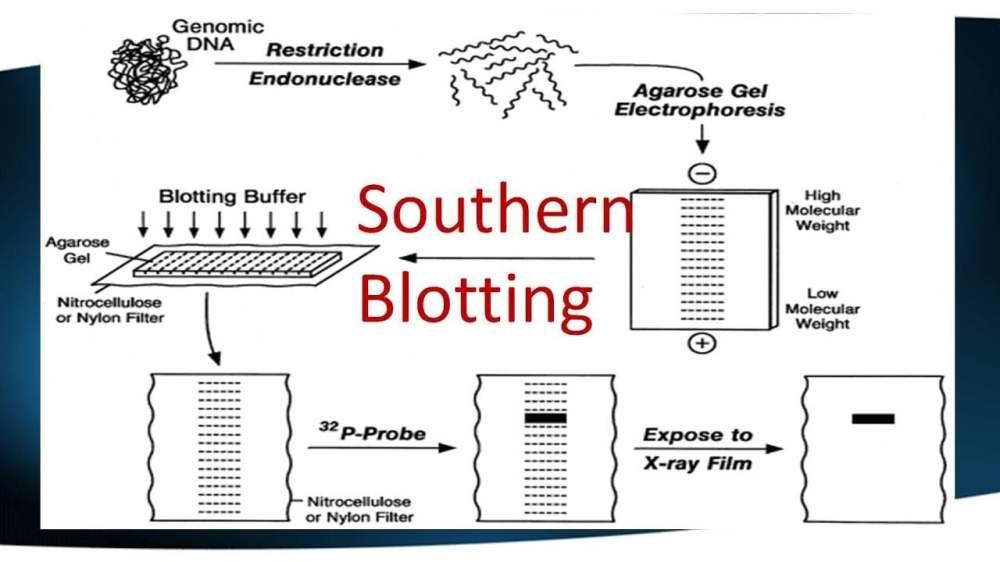 medium resolution of brief introduction blotting techniques