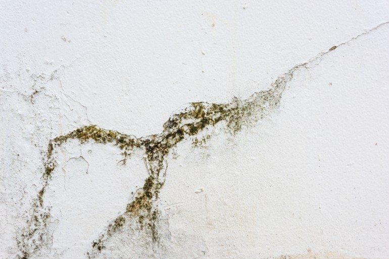 Common Painting Problems: What is Mildew?
