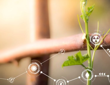 Enhance Quarantine Life: Boost Your Gardening Game with Technology
