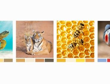 Celebrating the Colors of Wildlife | MyBoysen