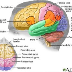 Left Side Brain Functions Diagram Savage Model 110 Parts About Traumatic Injury Mybraintest Injuries Of The Can Cause