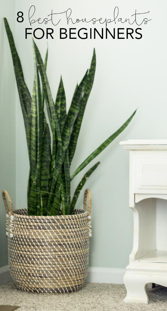 Indoor Plants Beginners